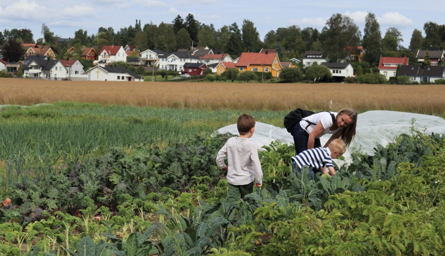 8 Andelslandbruk Bynaert Andelslandbruk Dysterjordet Pa A S Foto Emma Gerritsen