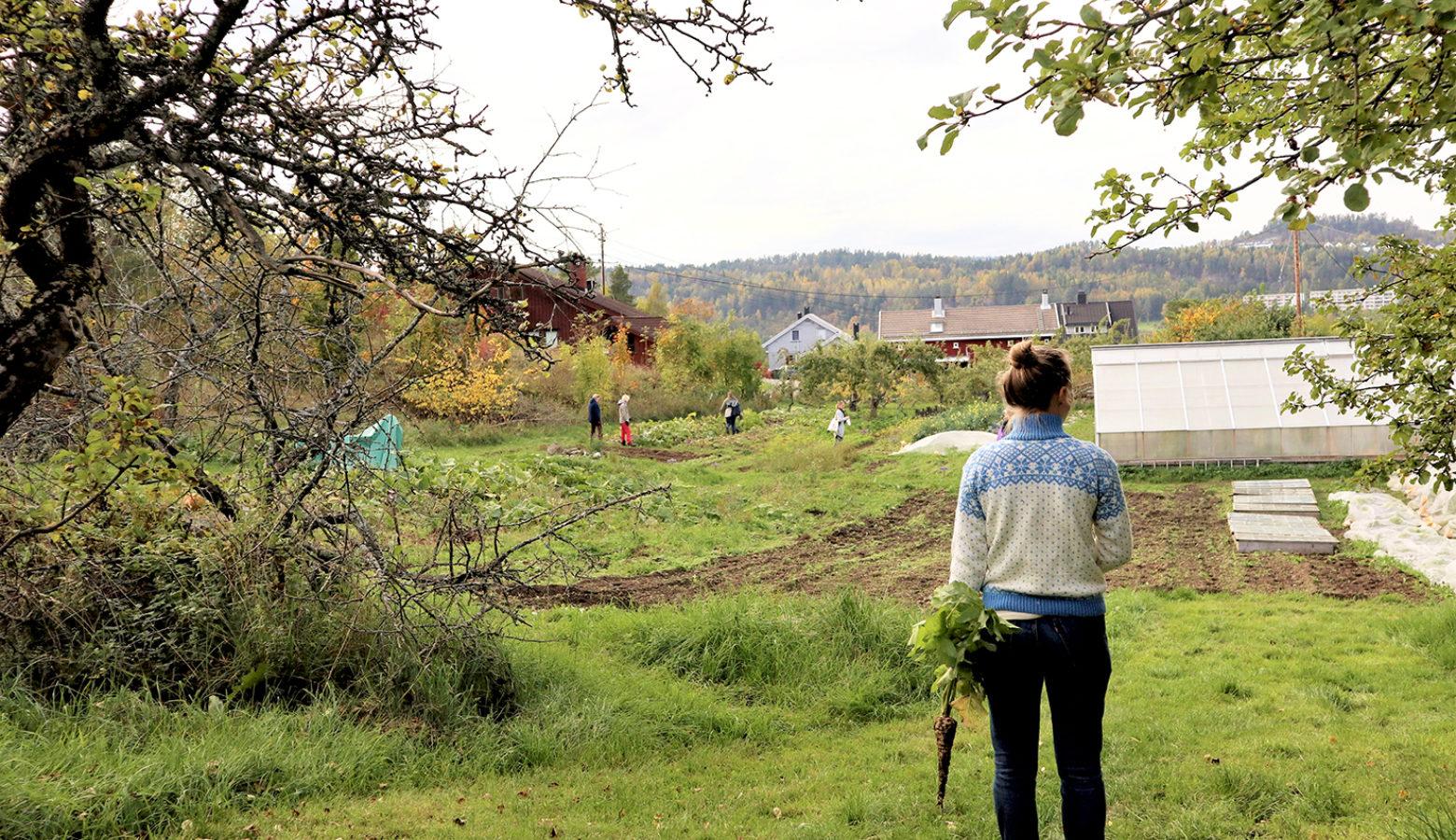 Akeren Pa Kirkerud Andelsgard  Foto Emma Gerritsen
