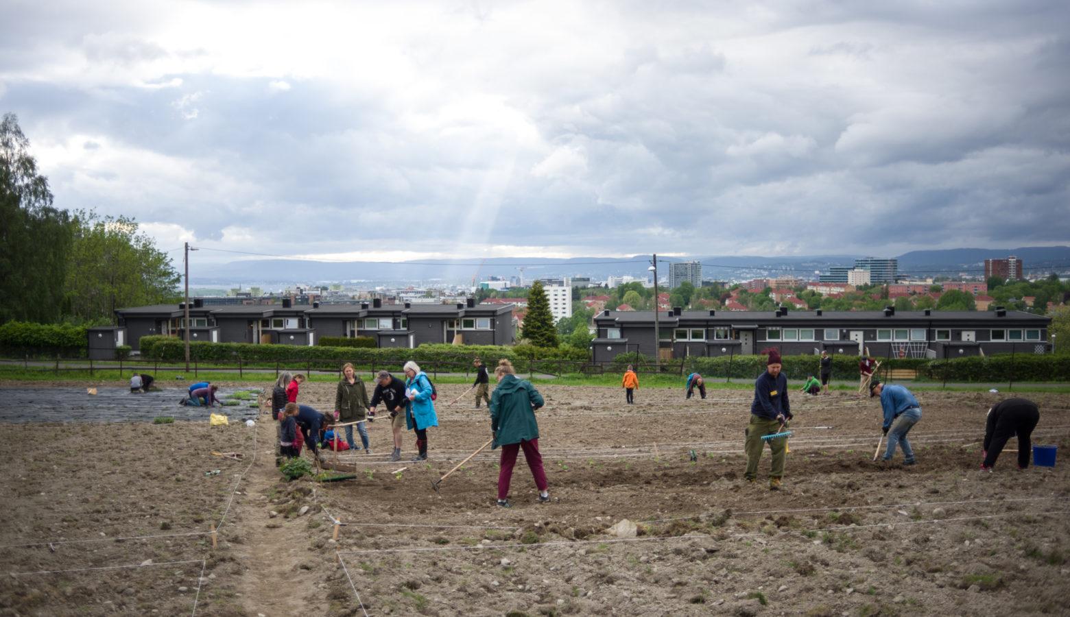 Tveten Urbant Landbruk Oyvind Horgmo