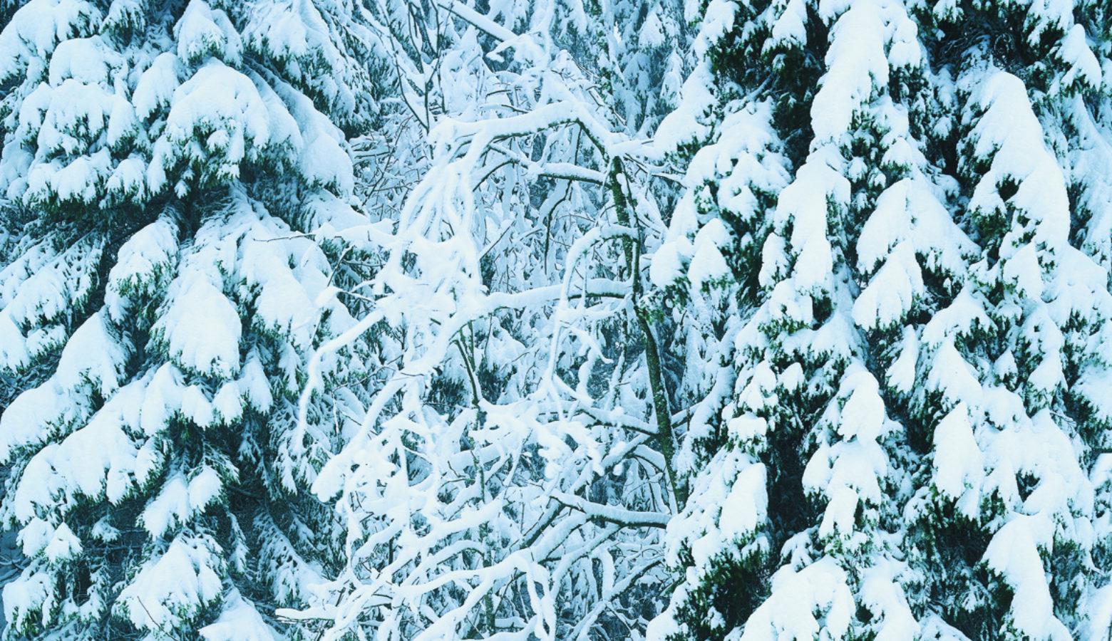 Snodekt Skog Foto Morten Brun