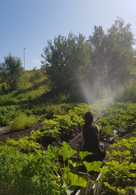 Leangen Parsellhage Foto Anne Gro Gullvik Froiland 2