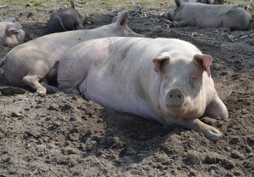 ikke mer dating griser